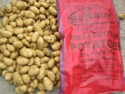 Египетский картофель / растаможенный картофель