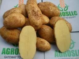 Купим картофель.