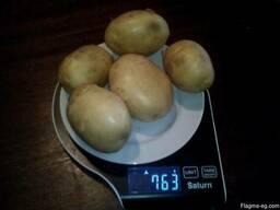 Купим овощи картофель, лук репчатый. - фото 6