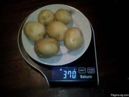 Купим овощи картофель, лук репчатый. - фото 7