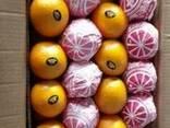 Апельсин Валенсия из Египта - фото 1