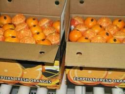 Апельсины Египетские - фото 4