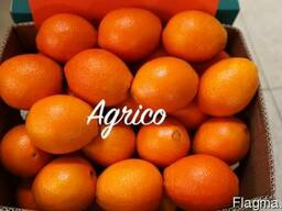 Апельсины свежие Египет - фото 4