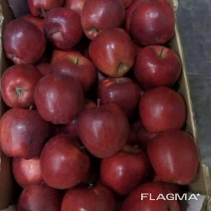 Apple Poland