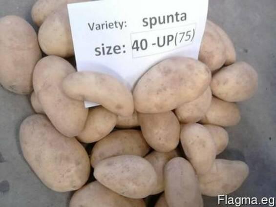 Молодой картофель из Египта