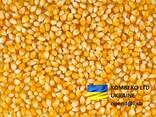 Corn Кукуруза - фото 1