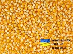 Corn Кукуруза