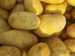Египетский Картофель - фото 2