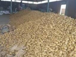 Египетский Картофель - фото 4