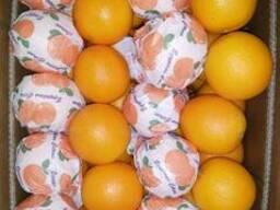 Египтский апельсин - фото 5