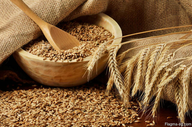Wheat food with protein 12.5 %