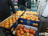 Грейпфруты красные - фото 1
