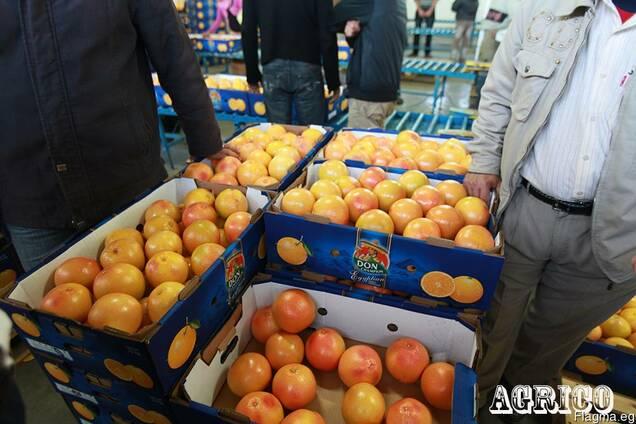 Грейпфруты красные