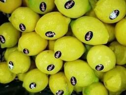 Лимон. Египет