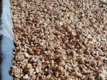 Продаём грецкий орех от тонны - фото 1