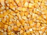 Пшеница, ячмень, кукуруза - photo 5