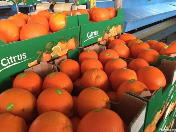 Валенсия - Апельсин из Египта / растаможенный апельсин