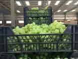 Виноград, без косточки - фото 2