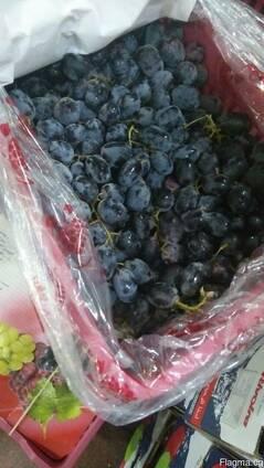 Виноград из Египта