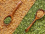 الفول وبذور الكتان والعدس والحمص والبازلاء وغيرها من المنتجات الزراعية. - фото 2